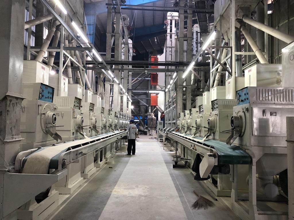 factory rice